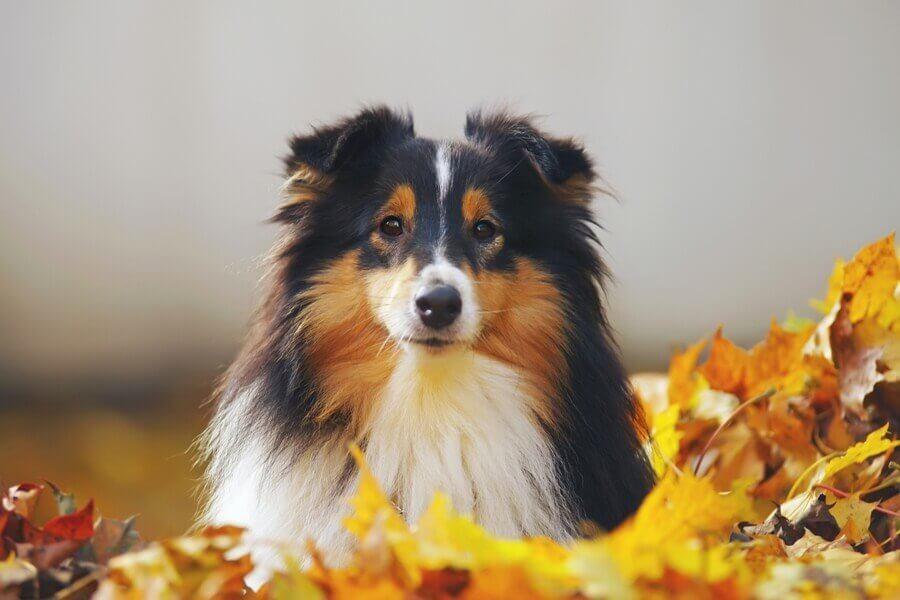 Schonkost Hund  Hundezahnpflege