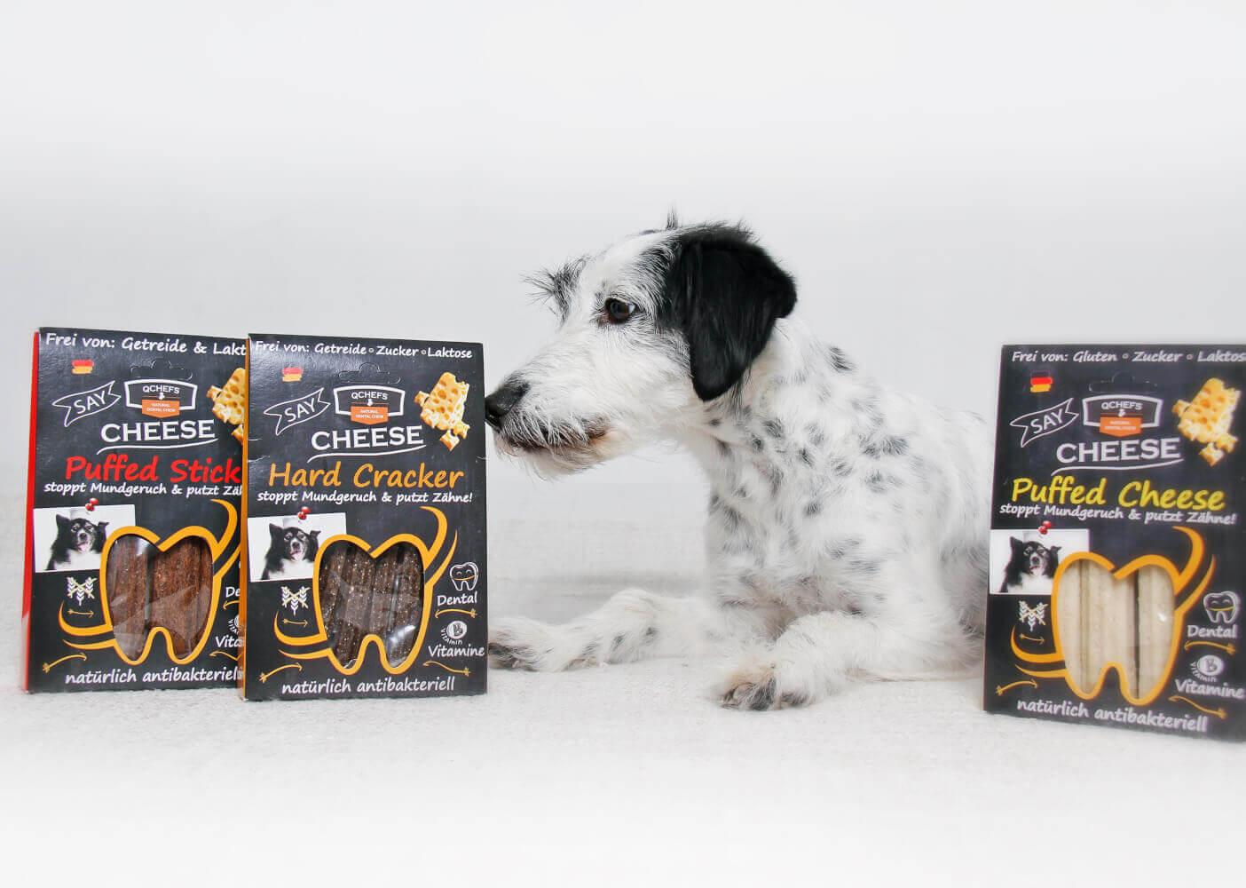 Hundezahnpflege