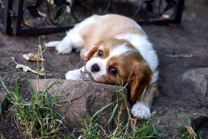 Kauartikel Hundezahnpflege