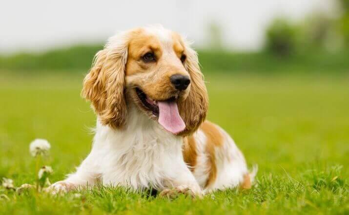 Kauspielzeug Welpen Hundezahnpflege