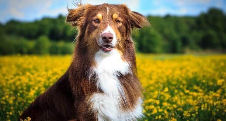 Natürliche Zahnpflege Hund Hundezahnpflege Hundezahnpflege