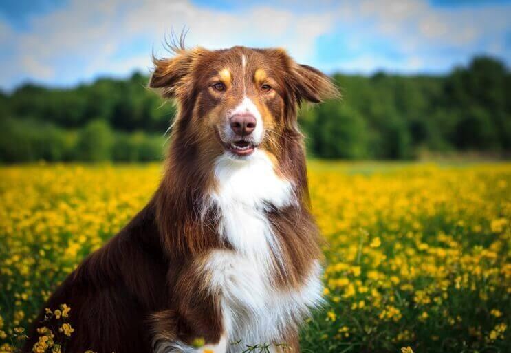 Natürliche Zahnpflege Hund