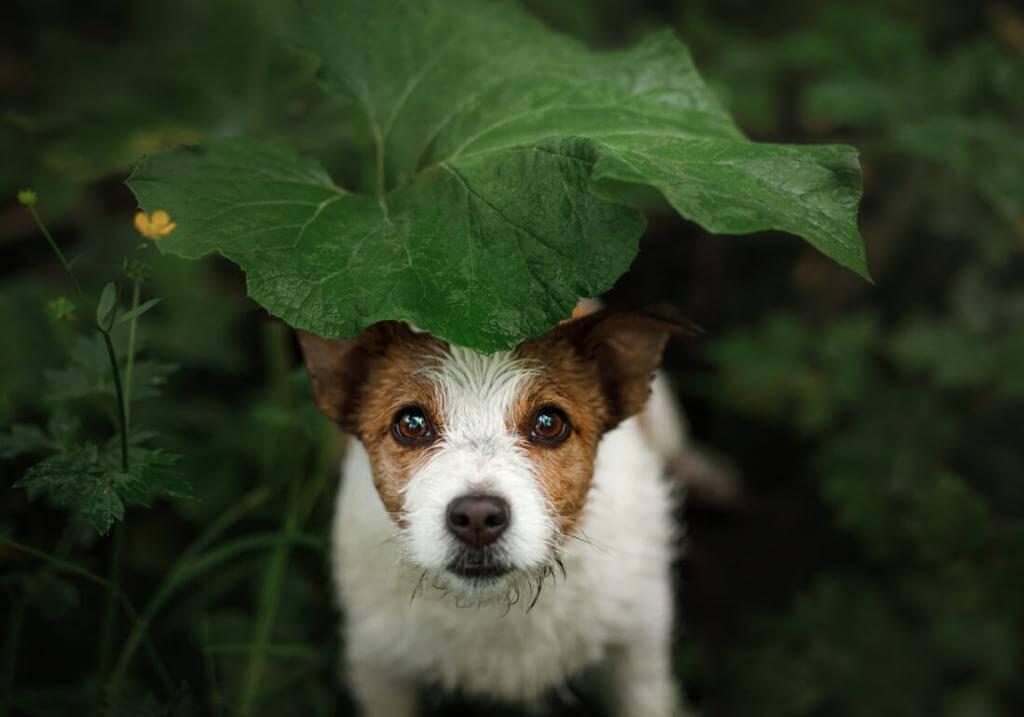 Vegetarisches Hundefutter Hundezahnpflege