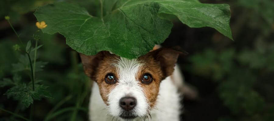 Vegetarisches Hundefutter Hundezahnpflege Hundezahnpflege