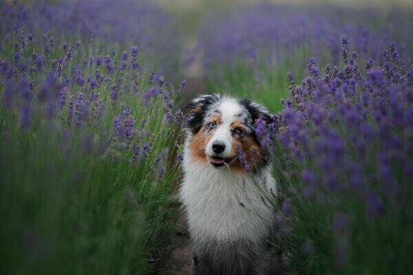 Zahnpflege Spielzeug Hund Hundezahnpflege