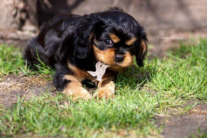 pansen Hundezahnpflege