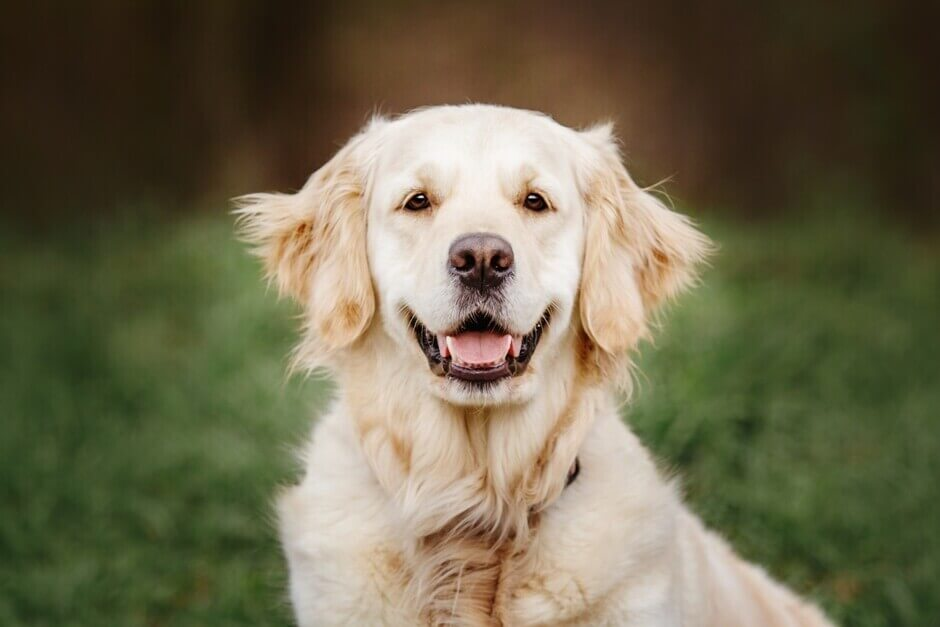Kausnack Hund Hundezahnpflege