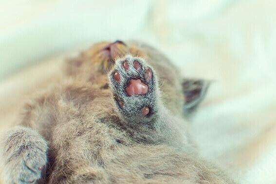 mundgeruch bei katzen  Hundezahnpflege