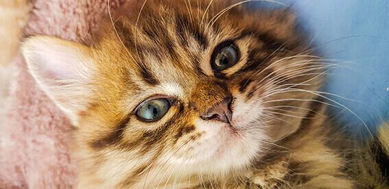natürliche zahnpflege katzen Hundezahnpflege