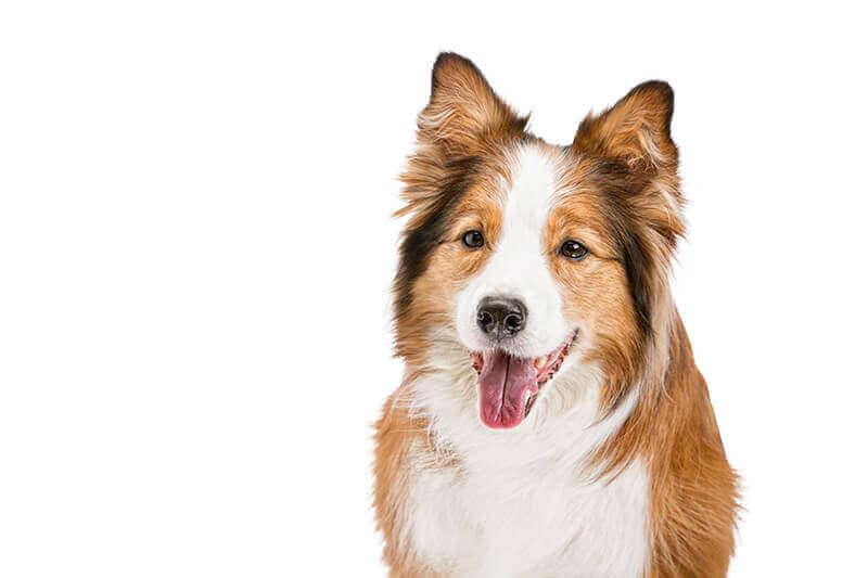 hunde zahnreinigung Hundezahnpflege