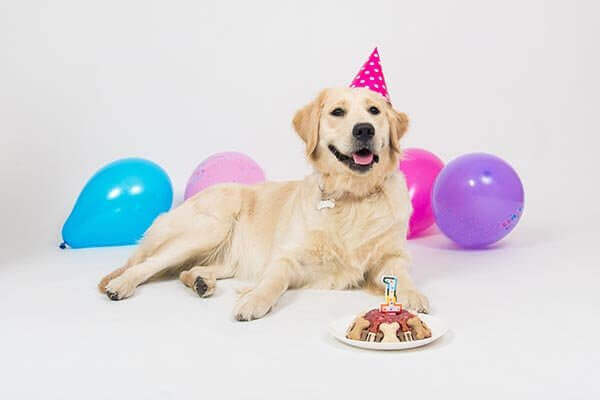 geburtstag hund Hundezahnpflege Hundezahnpflege