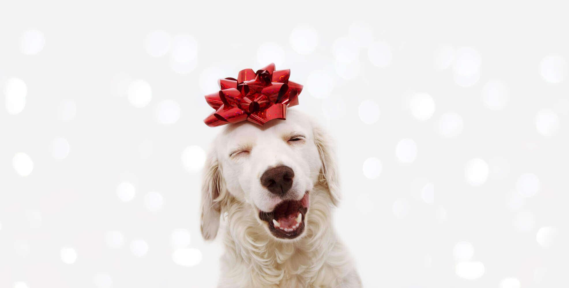geschenke für hunde Hundezahnpflege