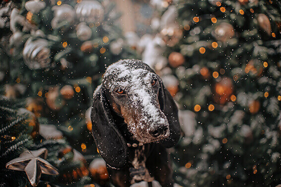 weihnachtskalender für hunde