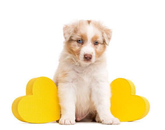 Welpengeschenk Hundezahnpflege