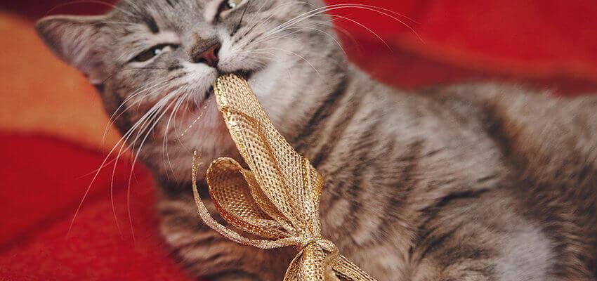 Geschenk Katze Hundezahnpflege