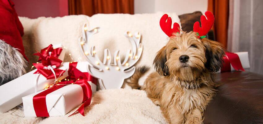 Hund Weihnachten Hundezahnpflege