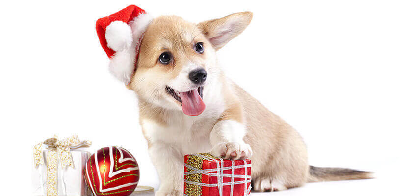 Weihnachtsbox Hund Hundezahnpflege