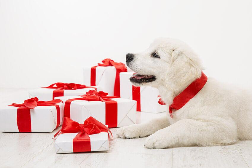 Weihnachtsbox Hund