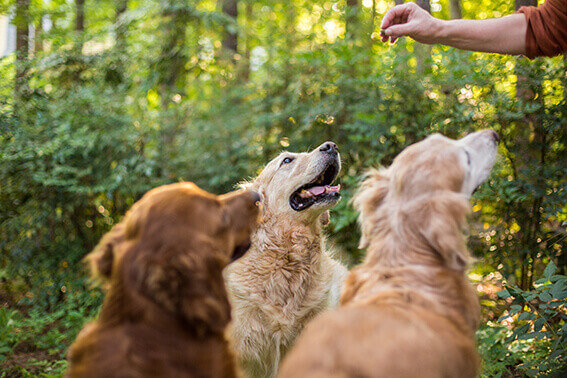 Hundeleckerli ohne Getreide
