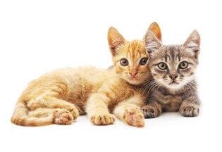 Katze Zahnpflege