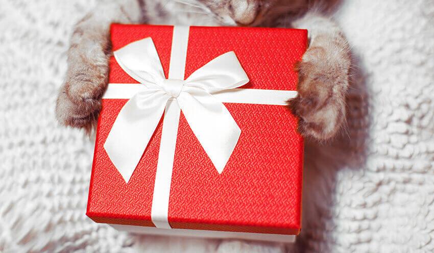 Weihnachtsgeschenke Katzen