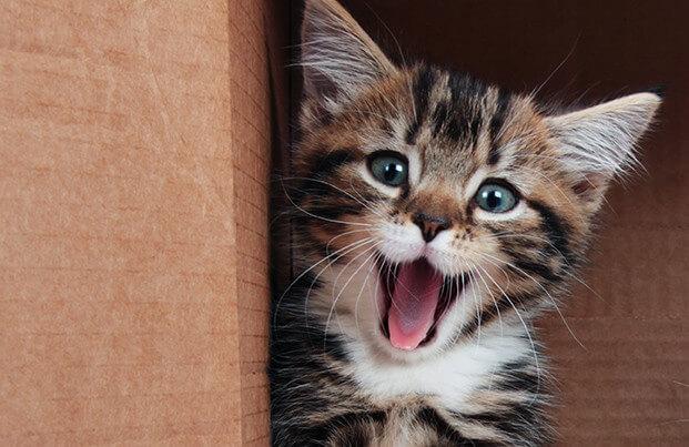 Katze Zahnstein entfernen