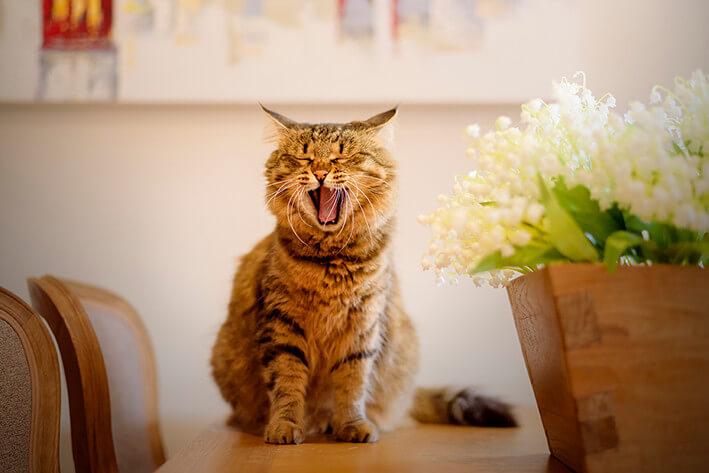 Katze frisst nicht → jetzt wissen warum + was hilft!