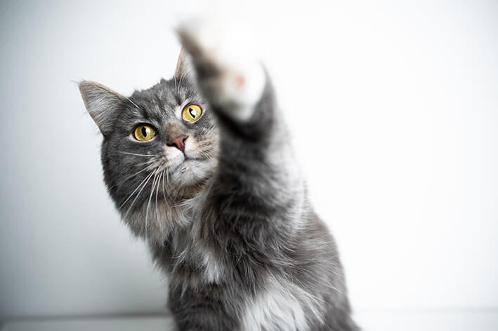 Katzen Zahnpflege Snack