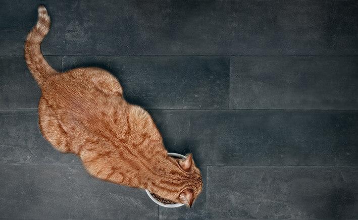 Katzenfutter Zahnpflege