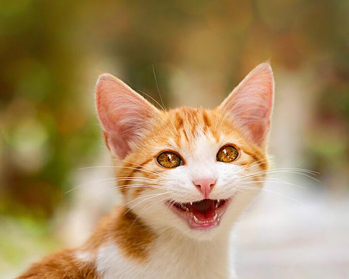 Kauknochen für Katzen