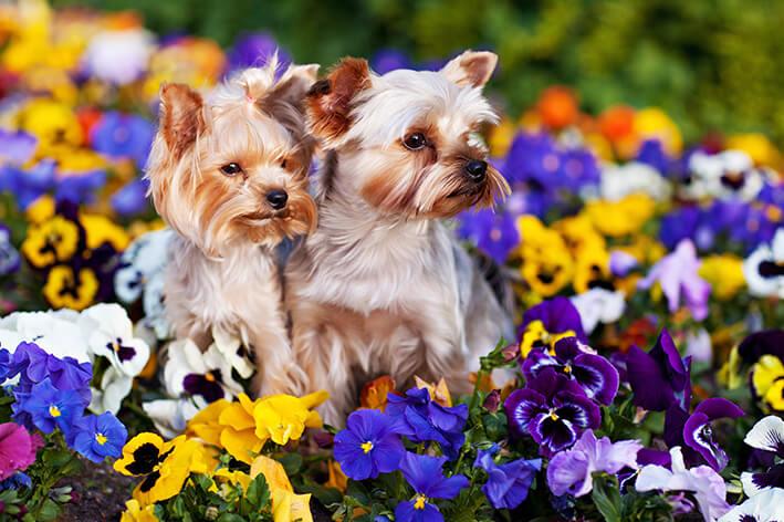 Kauknochen für kleine Hunde