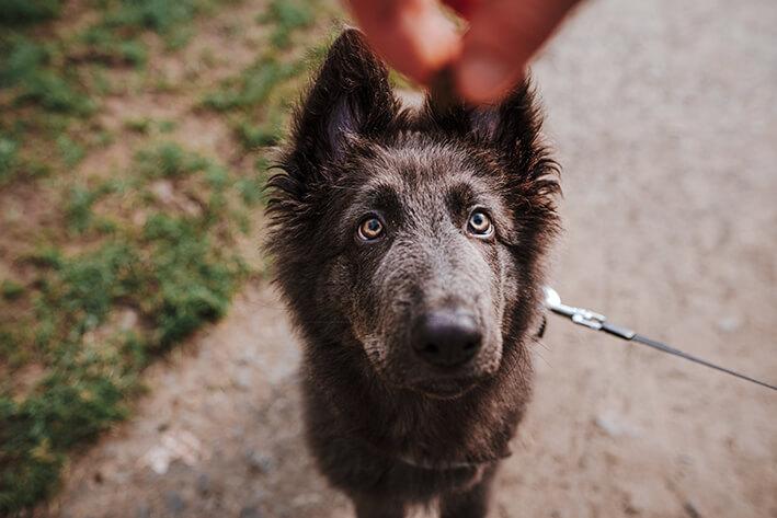 Leckerli für sensible Hunde