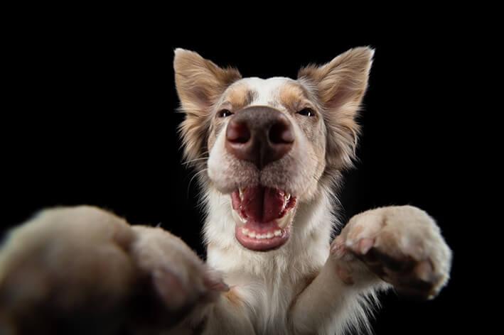 Vegetarische Kauknochen für Hunde