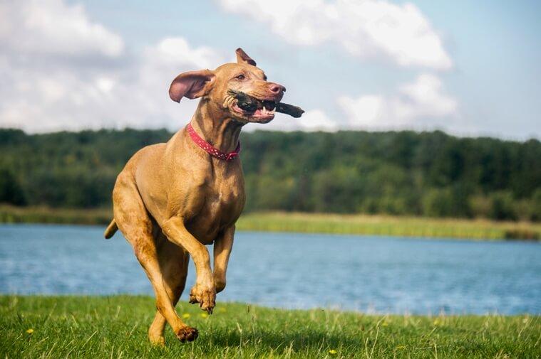 Immunsystem stärken Hund Hausmittel
