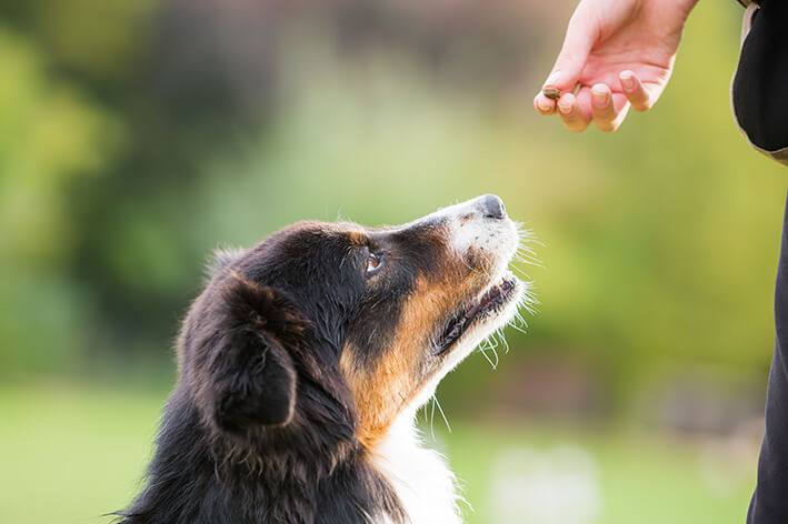 Natural Snackies für Hunde