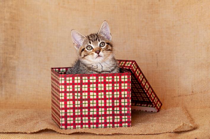 katzengeschenke